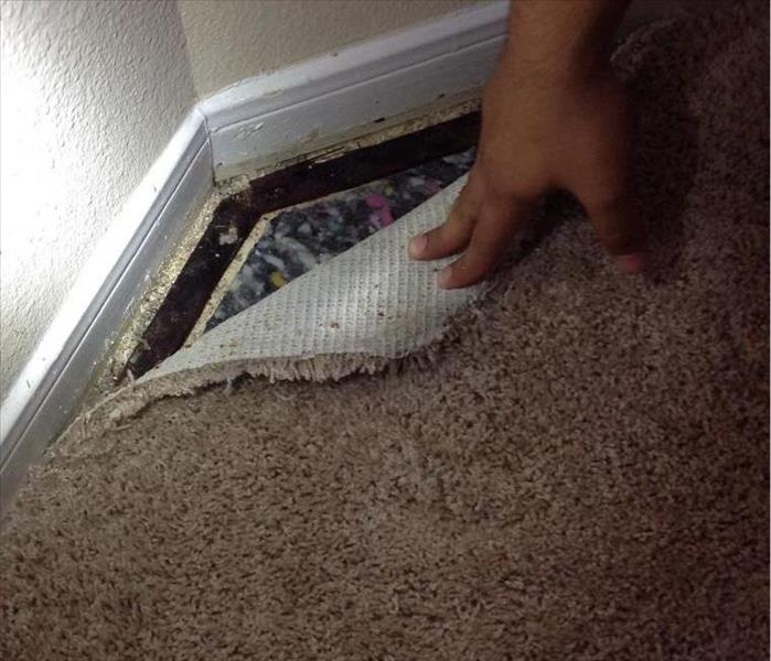 Mold Remediation  -  Grapevine, TX